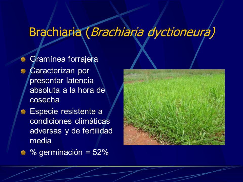 Objetivo Evaluar el efecto del Ácido Giberélico en distintas concentraciones y bajo dos tiempos de inmersión, sobre la germinación de las semillas de Arroz (Oryza sativa), Kudzú (Pueraria phaseloides) y Brachiaria (Brachiaria dictyoneura).