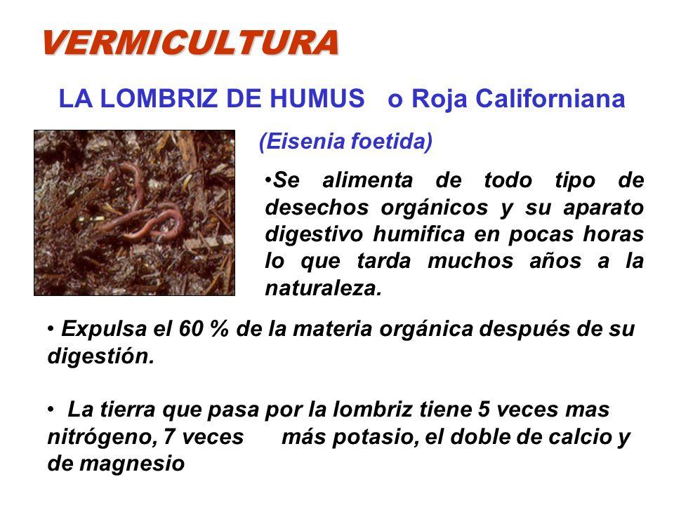 VERMICULTURA LA LOMBRIZ DE HUMUS o Roja Californiana (Eisenia foetida) Expulsa el 60 % de la materia orgánica después de su digestión. La tierra que p
