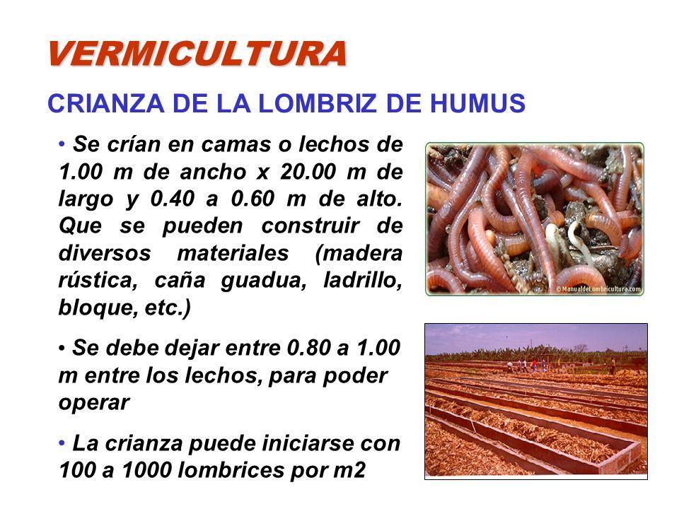 VERMICULTURA CRIANZA DE LA LOMBRIZ DE HUMUS Se crían en camas o lechos de 1.00 m de ancho x 20.00 m de largo y 0.40 a 0.60 m de alto. Que se pueden co