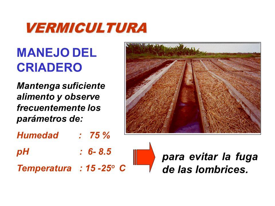 VERMICULTURA MANEJO DEL CRIADERO Mantenga suficiente alimento y observe frecuentemente los parámetros de: Humedad : 75 % pH : 6- 8.5 Temperatura : 15