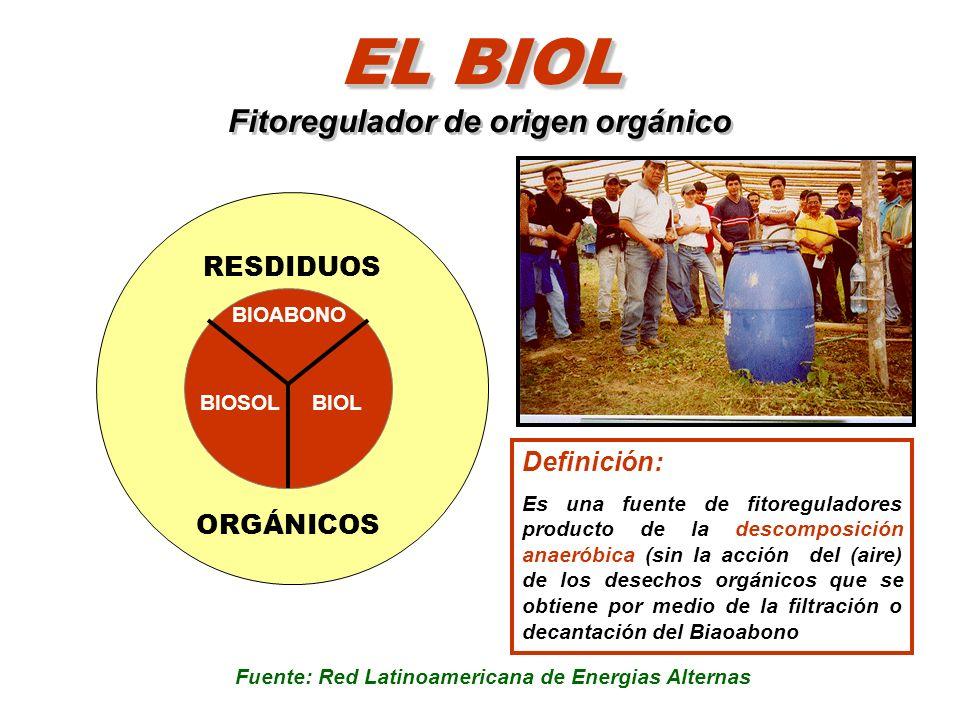 EL BIOL EL BIOL Fitoregulador de origen orgánico Definición: Es una fuente de fitoreguladores producto de la descomposición anaeróbica (sin la acción