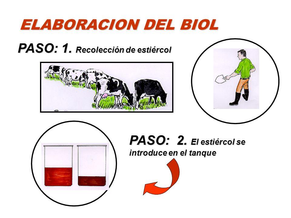 PASO: 1. Recolección de estiércol PASO: 2. El estiércol se introduce en el tanque ELABORACION DEL BIOL