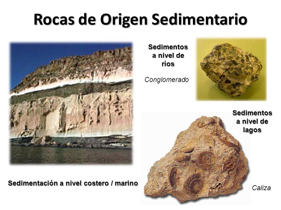Rocas de Origen Sedimentario Sedimentación a nivel costero / marino Sedimentos a nivel de ríos Sedimentos a nivel de lagos Caliza Conglomerado