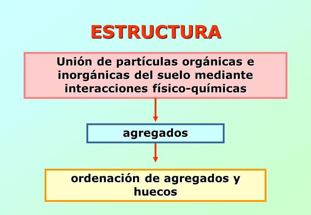 ESTRUCTURA Unión de partículas orgánicas e inorgánicas del suelo mediante interacciones físico-químicas agregados ordenación de agregados y huecos