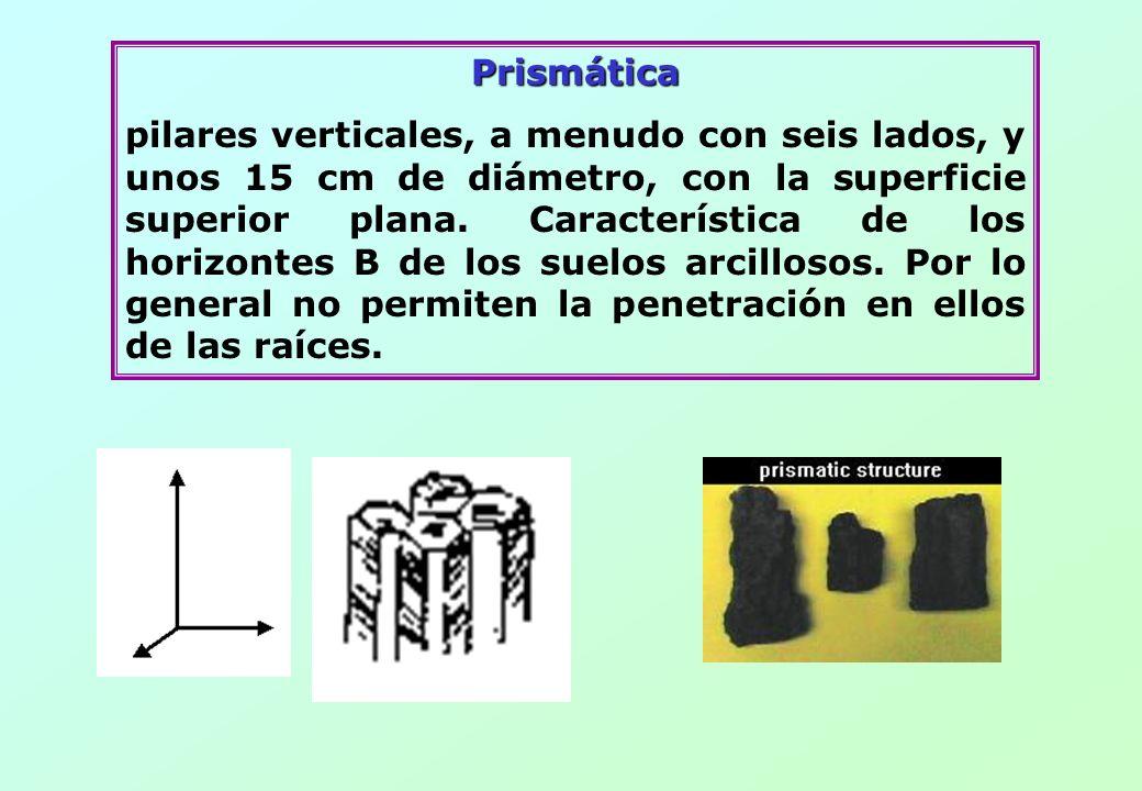 Prismática pilares verticales, a menudo con seis lados, y unos 15 cm de diámetro, con la superficie superior plana. Característica de los horizontes B