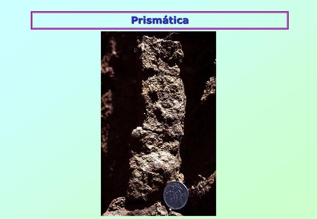 Prismática