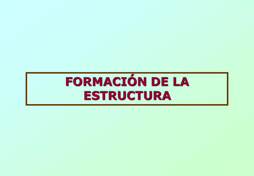 FORMACIÓN DE LA ESTRUCTURA