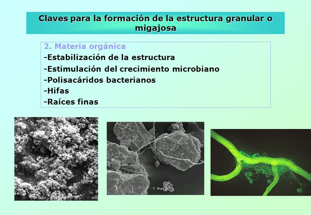 Claves para la formación de la estructura granular o migajosa 2. Materia orgánica -Estabilización de la estructura -Estimulación del crecimiento micro