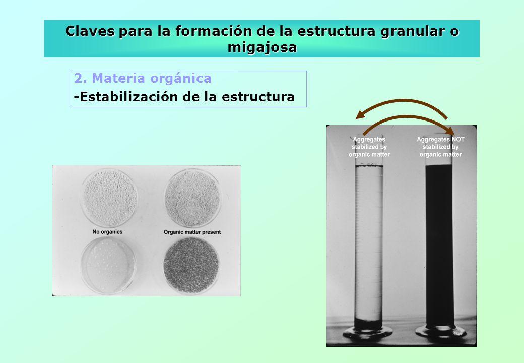Claves para la formación de la estructura granular o migajosa 2. Materia orgánica -Estabilización de la estructura