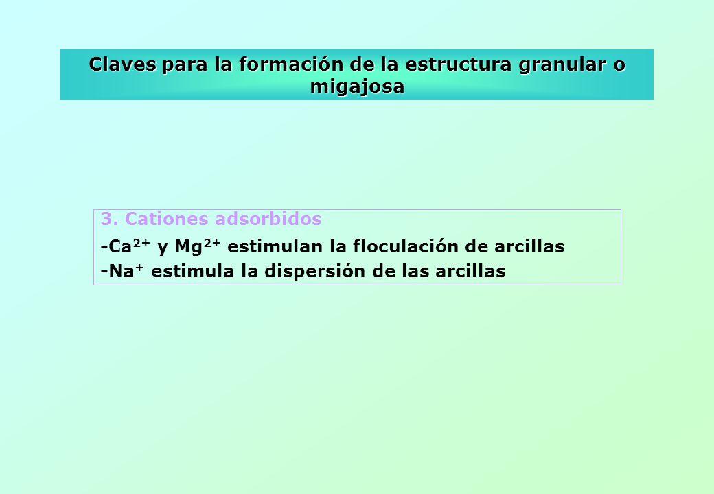 Claves para la formación de la estructura granular o migajosa 3. Cationes adsorbidos -Ca 2+ y Mg 2+ estimulan la floculación de arcillas -Na + estimul