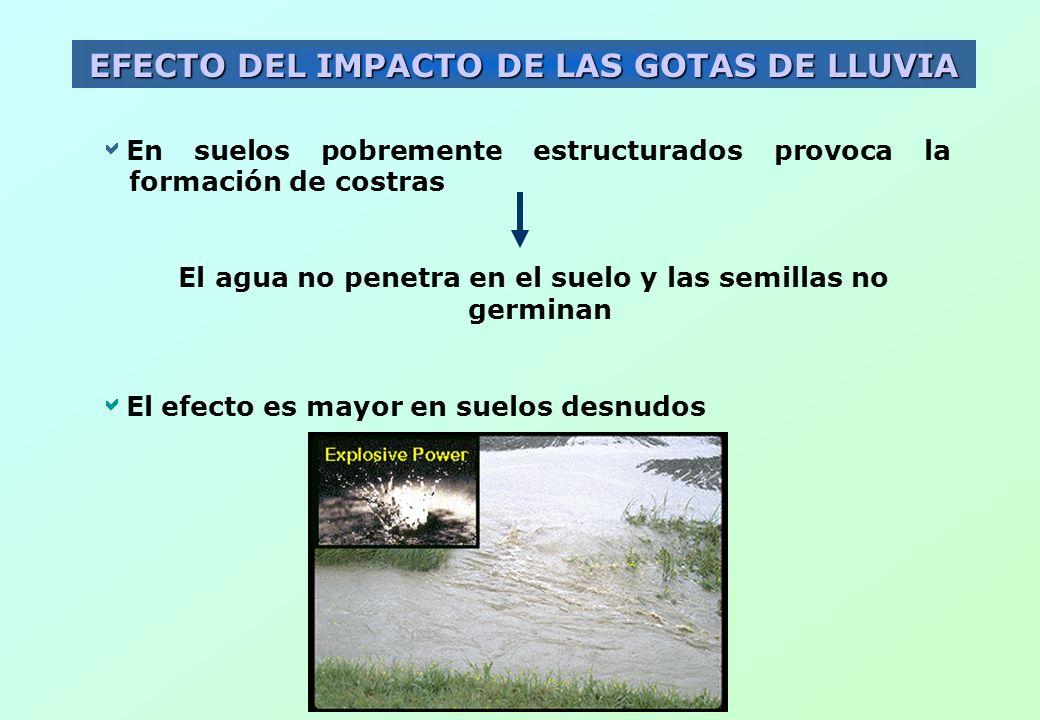EFECTO DEL IMPACTO DE LAS GOTAS DE LLUVIA En suelos pobremente estructurados provoca la formación de costras El agua no penetra en el suelo y las semi