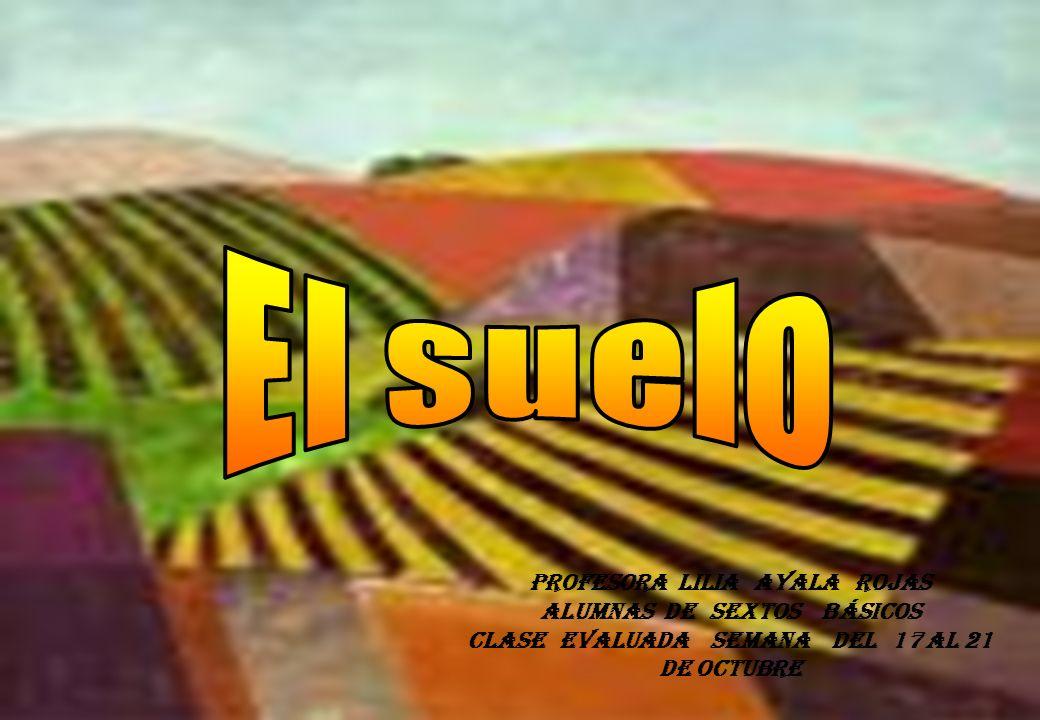 Profesora Lilia Ayala Rojas Alumnas de sextos básicos Clase evaluada semana del 17 al 21 de octubre
