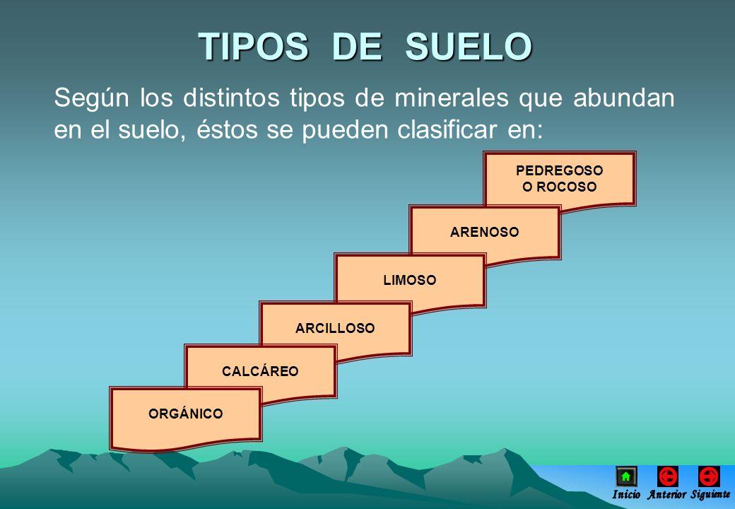 Según los distintos tipos de minerales que abundan en el suelo, éstos se pueden clasificar en: PEDREGOSO O ROCOSO ARENOSO LIMOSO ARCILLOSO CALCÁREO OR