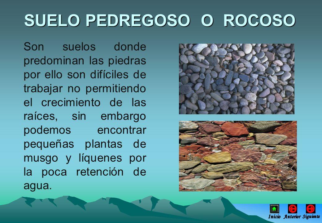 Son suelos donde predominan las piedras por ello son difíciles de trabajar no permitiendo el crecimiento de las raíces, sin embargo podemos encontrar