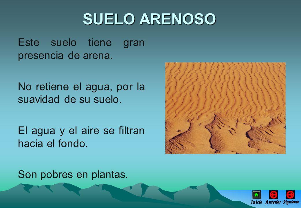 Este suelo tiene gran presencia de arena. No retiene el agua, por la suavidad de su suelo. El agua y el aire se filtran hacia el fondo. Son pobres en