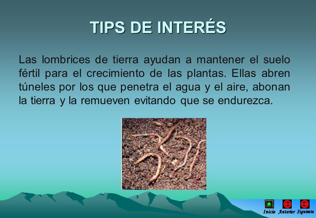Las lombrices de tierra ayudan a mantener el suelo fértil para el crecimiento de las plantas. Ellas abren túneles por los que penetra el agua y el air