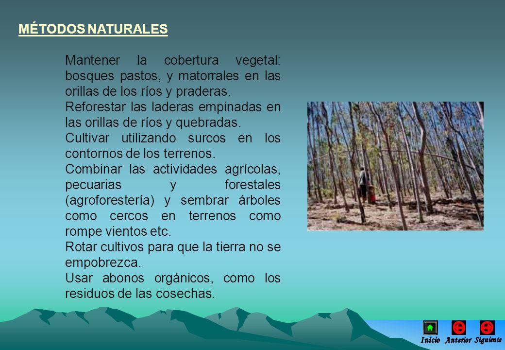 MÉTODOS NATURALES Mantener la cobertura vegetal: bosques pastos, y matorrales en las orillas de los ríos y praderas. Reforestar las laderas empinadas