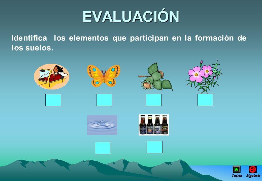 EVALUACIÓN Identifica los elementos que participan en la formación de los suelos.