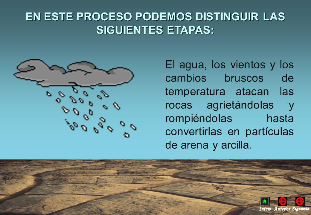 Conclusiones ¿Observas la formación de burbujas al añadir el agua.