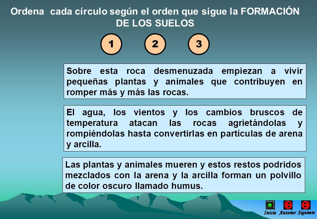Ordena cada círculo según el orden que sigue la FORMACIÓN DE LOS SUELOS Sobre esta roca desmenuzada empiezan a vivir pequeñas plantas y animales que c