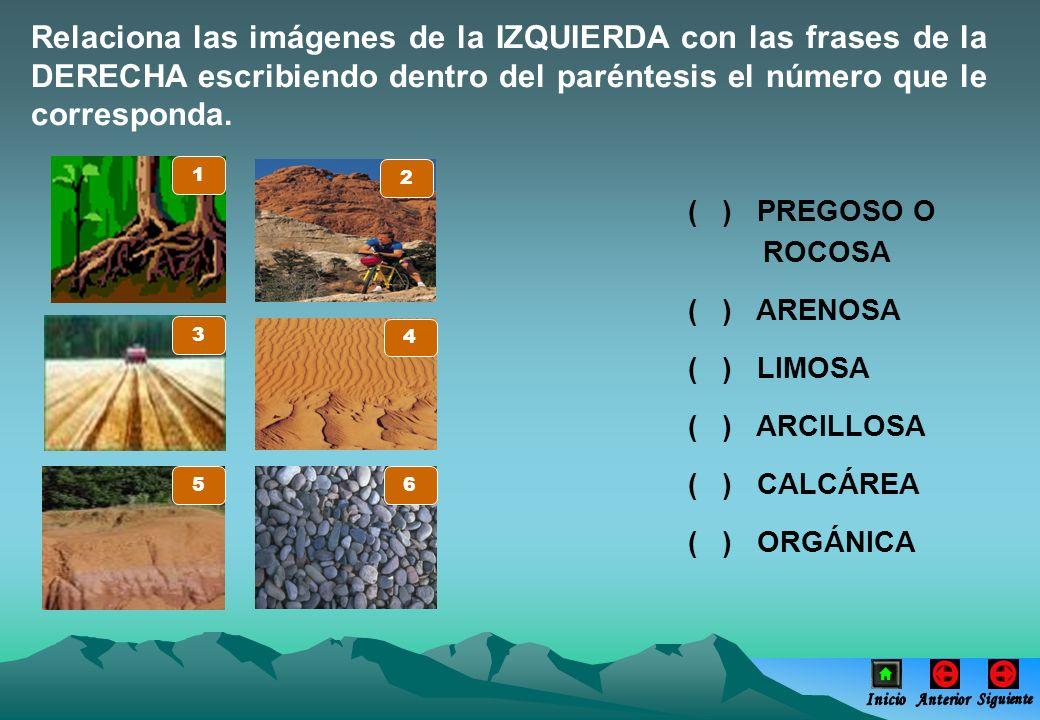 Relaciona las imágenes de la IZQUIERDA con las frases de la DERECHA escribiendo dentro del paréntesis el número que le corresponda. ( ) PREGOSO O ROCO