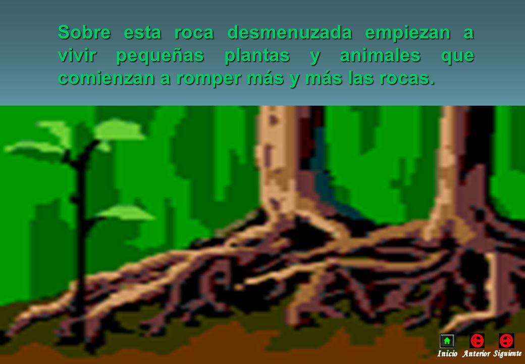 CONTAMINACIÓN NATURAL DE LOS SUELOS Ocasionada por: - Radiactividad natural.