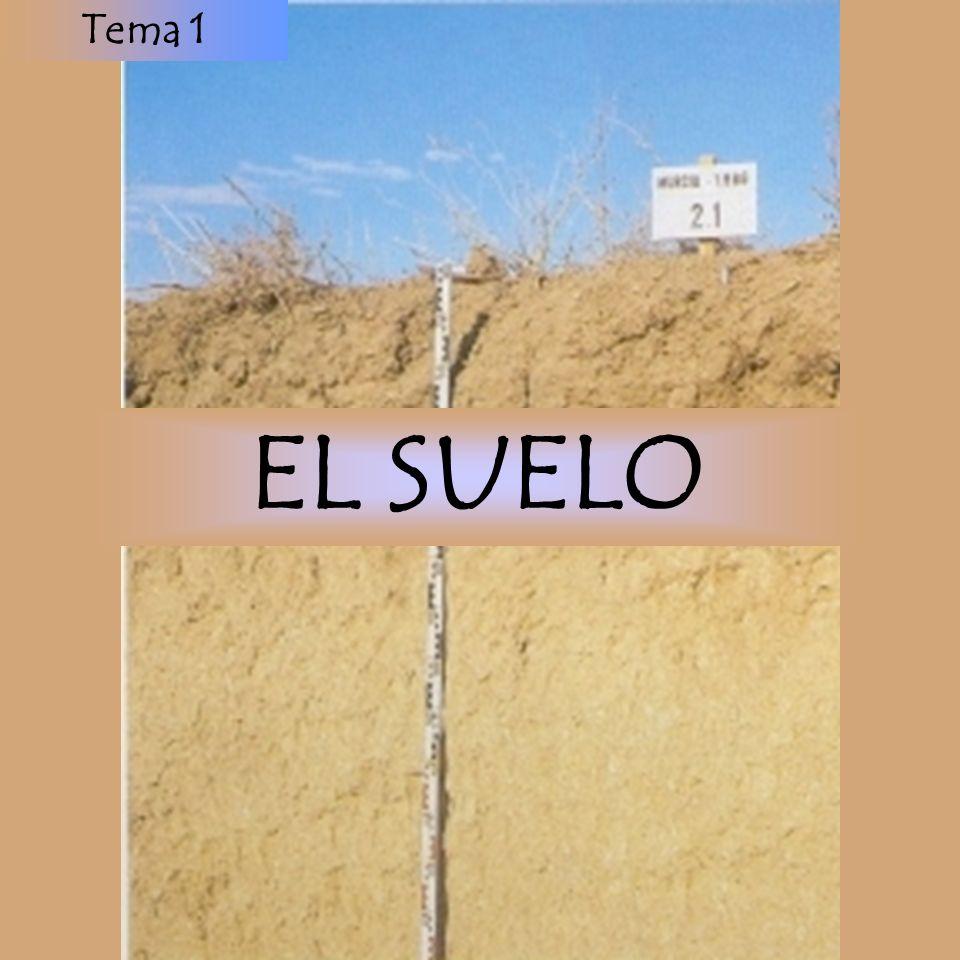 EL SUELO Tema 1