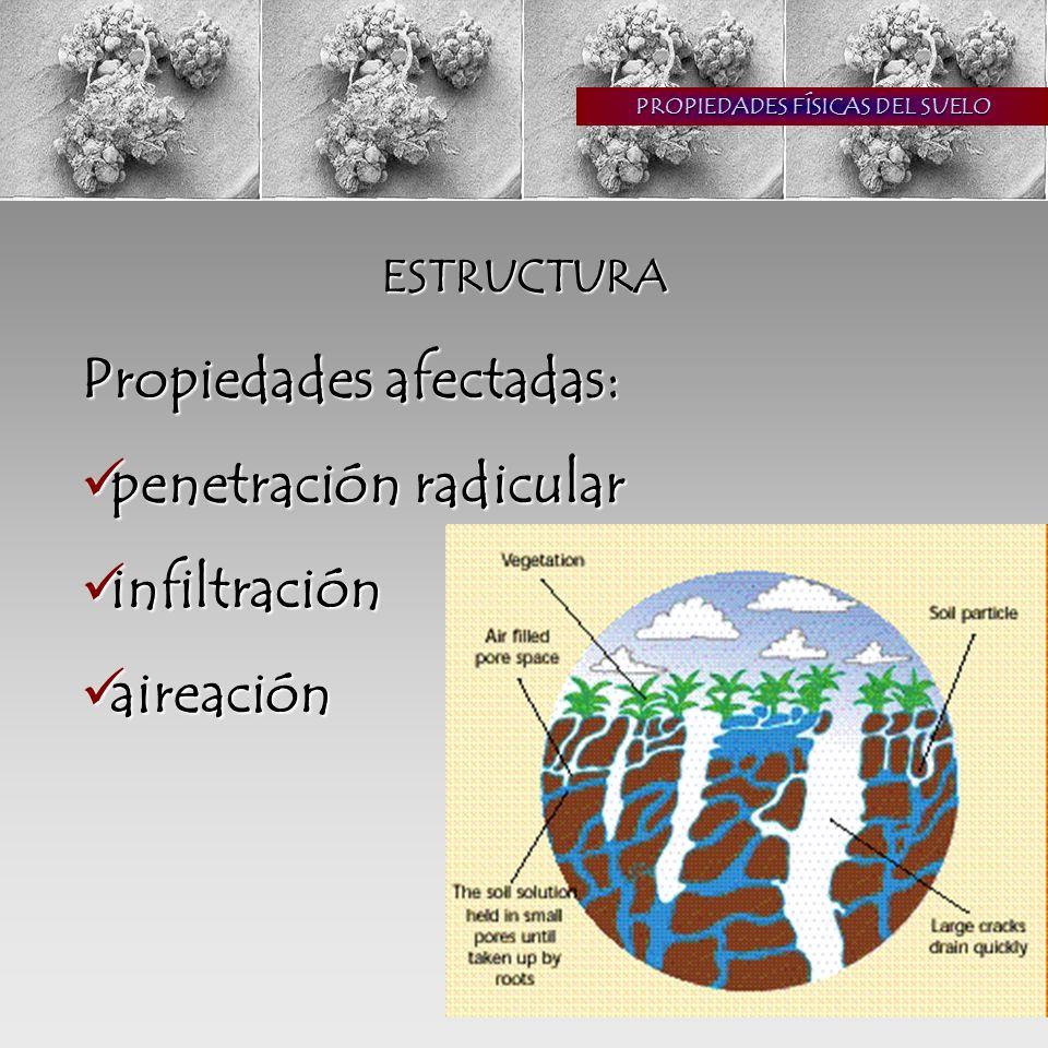 PROPIEDADES FÍSICAS DEL SUELO ESTRUCTURA Propiedades afectadas: penetración radicular penetración radicular infiltración infiltración aireación aireación