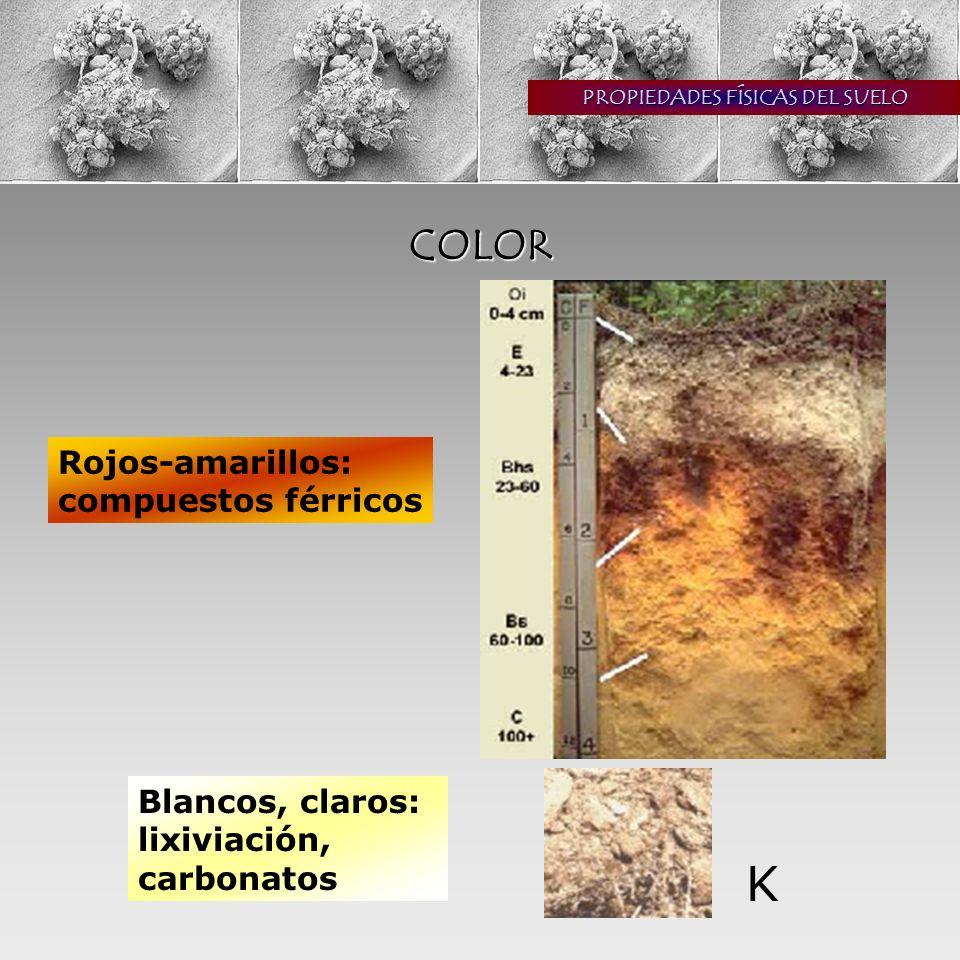 PROPIEDADES FÍSICAS DEL SUELO COLOR Rojos-amarillos: compuestos férricos Blancos, claros: lixiviación, carbonatos K