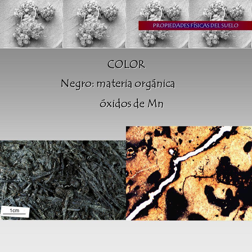 PROPIEDADES FÍSICAS DEL SUELO COLOR Negro: materia orgánica óxidos de Mn