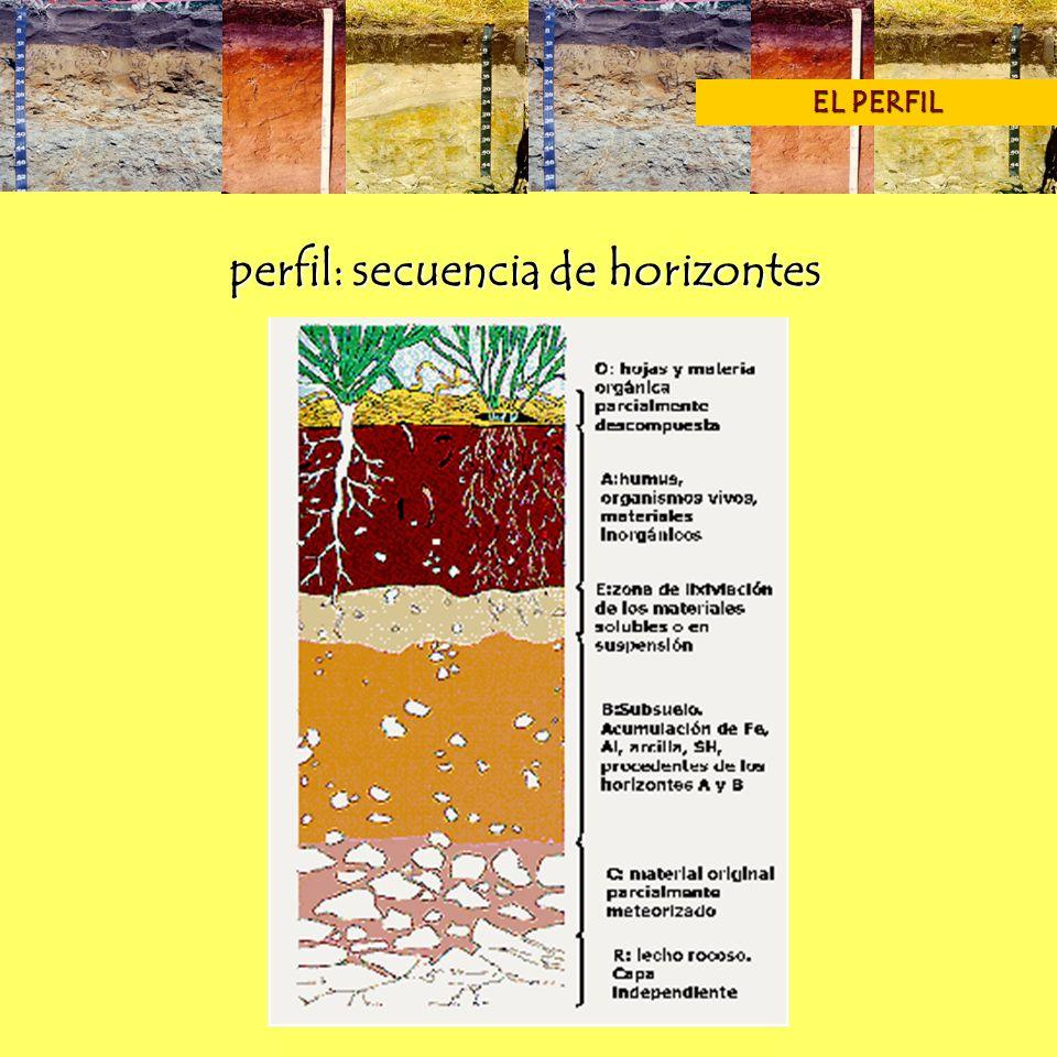 perfil: secuencia de horizontes