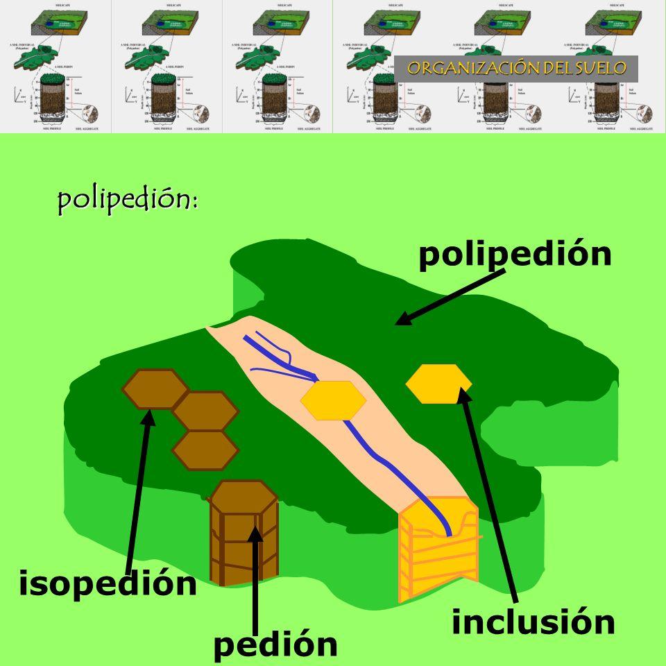 ORGANIZACIÓN DEL SUELO polipedión: polipedión isopedión pedión inclusión