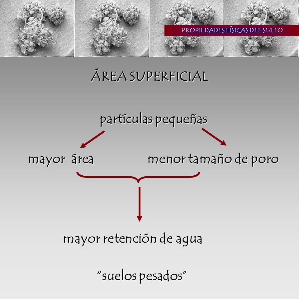 PROPIEDADES FÍSICAS DEL SUELO ESTRUCTURA Ordenación de las partículas en agregados cementante: m.o., uniones catiónicas, raíces (peds)