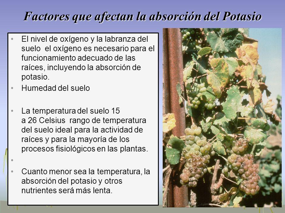 Factores que afectan la absorción del Potasio El nivel de oxígeno y la labranza del suelo el oxígeno es necesario para el funcionamiento adecuado de l