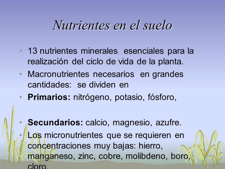 Nutrientes en el suelo 13 nutrientes minerales esenciales para la realización del ciclo de vida de la planta. Macronutrientes necesarios en grandes ca