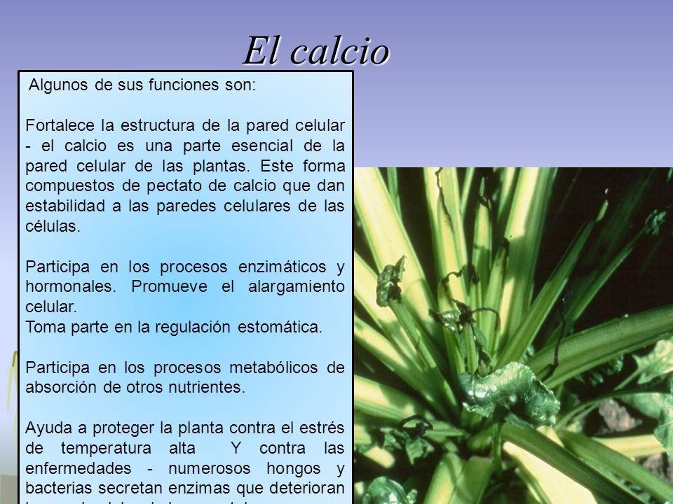El calcio Algunos de sus funciones son: Fortalece la estructura de la pared celular - el calcio es una parte esencial de la pared celular de las plant