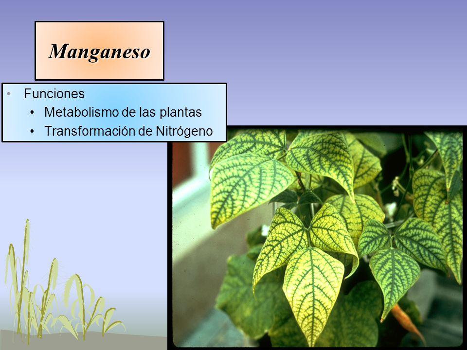 Manganeso Funciones Metabolismo de las plantas Transformación de Nitrógeno