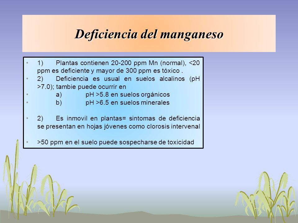 1)Plantas contienen 20-200 ppm Mn (normal), <20 ppm es deficiente y mayor de 300 ppm es tóxico. 2)Deficiencia es usual en suelos alcalinos (pH >7.0);