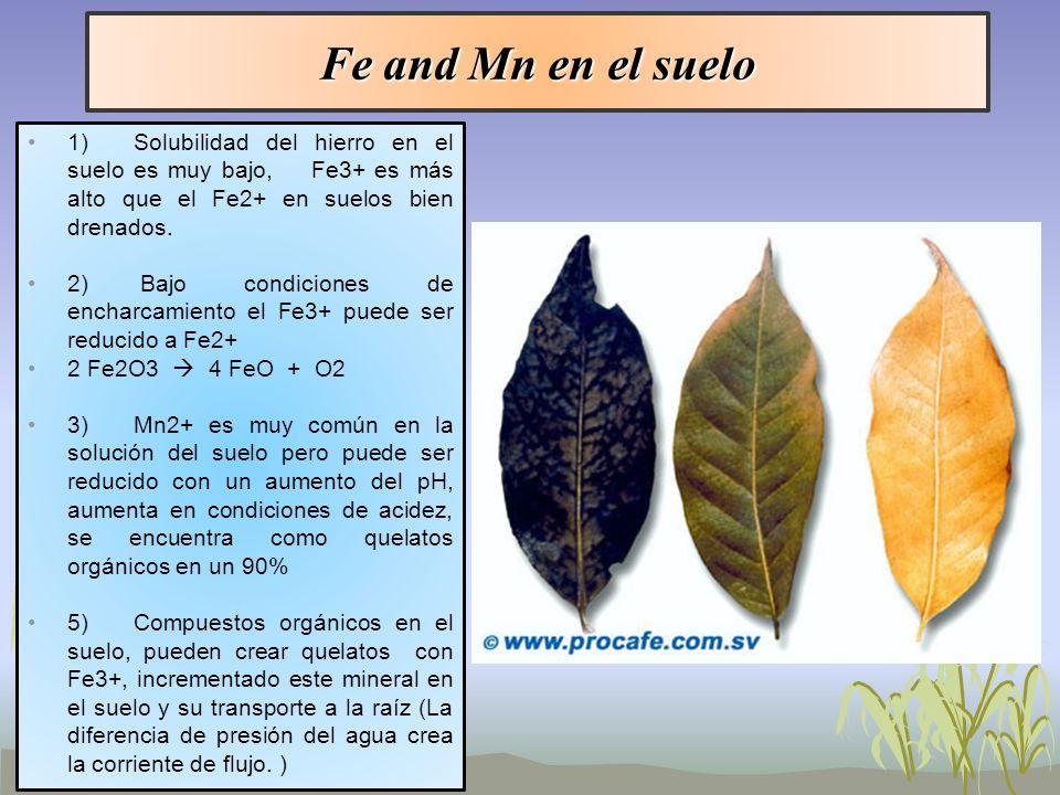 Fe and Mn en el suelo 1)Solubilidad del hierro en el suelo es muy bajo, Fe3+ es más alto que el Fe2+ en suelos bien drenados. 2) Bajo condiciones de e