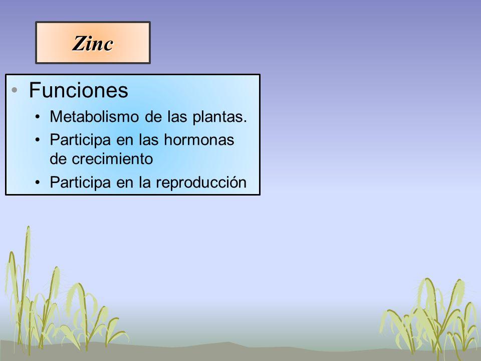 Zinc Funciones Metabolismo de las plantas. Participa en las hormonas de crecimiento Participa en la reproducción