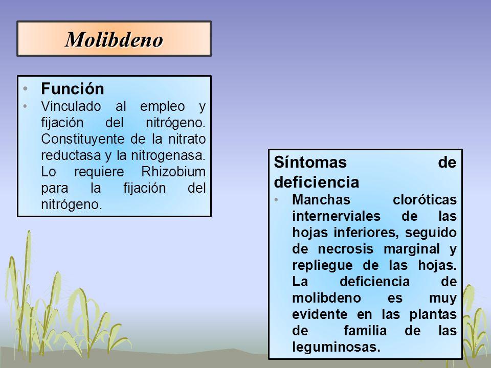 Molibdeno Función Vinculado al empleo y fijación del nitrógeno. Constituyente de la nitrato reductasa y la nitrogenasa. Lo requiere Rhizobium para la