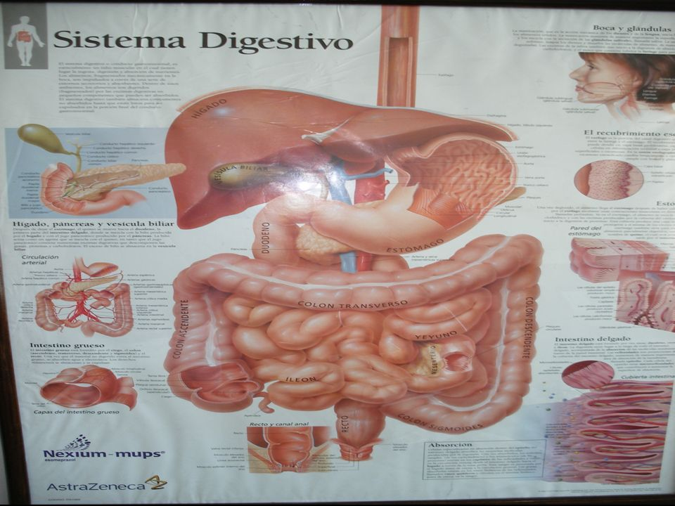 Complicaciones Osteoarticulares Columna Cadera Rodilla Tobillo