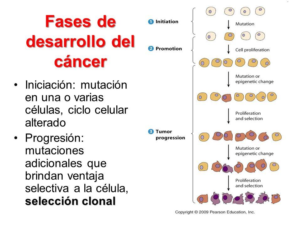 Fases de desarrollo del cáncer Iniciación: mutación en una o varias células, ciclo celular alterado selección clonalProgresión: mutaciones adicionales
