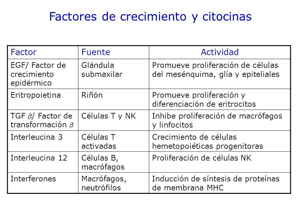 FactorFuenteActividad EGF/ Factor de crecimiento epidérmico Glándula submaxilar Promueve proliferación de células del mesénquima, glía y epiteliales E