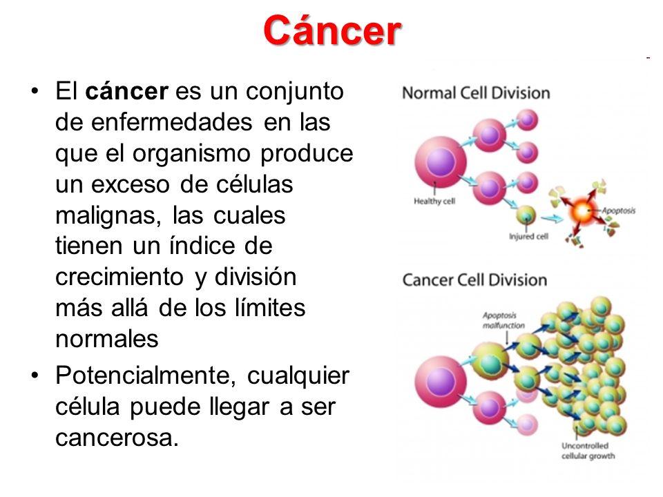 p53 Guardián del genoma Mutado en más del 50% de los cánceres Es un factor de transcripción que reprime o estimula la transcripción de más de 50 genes Responde a daño en el DNA, detiene el ciclo celular y estimula la reparación de los daños o estimula la apoptosis si los daños no son reparados