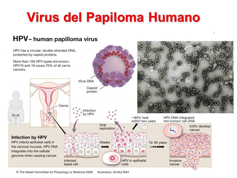 Вирус папилломы hpv 16 18