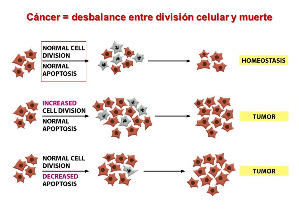 Tumores benignos y malignos Tumor benigno: las células permanecen en su sitio de origen y no se diseminan a otro tejidos.