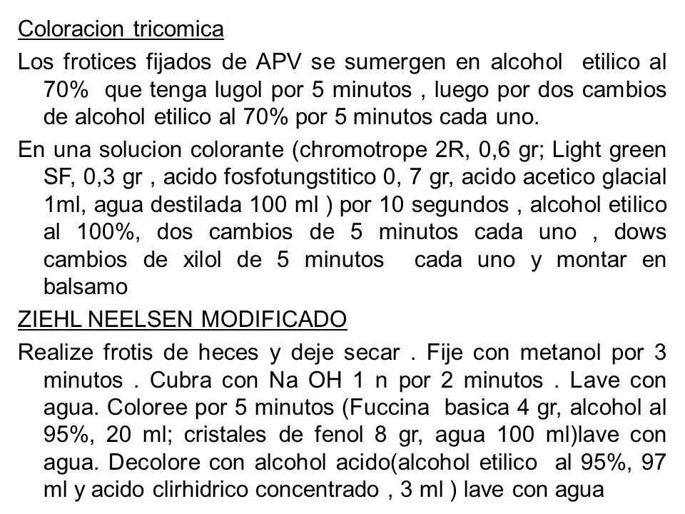 Coloracion tricomica Los frotices fijados de APV se sumergen en alcohol etilico al 70% que tenga lugol por 5 minutos, luego por dos cambios de alcohol
