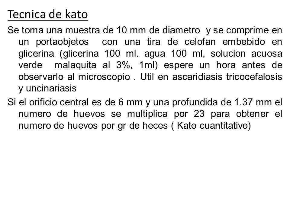 Tecnica de kato Se toma una muestra de 10 mm de diametro y se comprime en un portaobjetos con una tira de celofan embebido en glicerina (glicerina 100