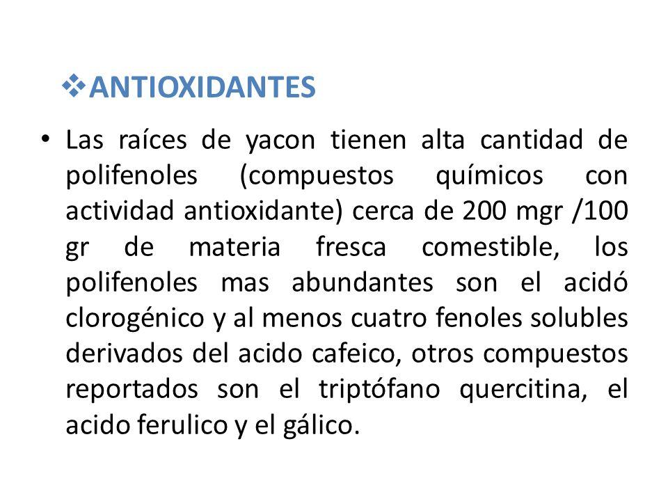 ANTIOXIDANTES Las raíces de yacon tienen alta cantidad de polifenoles (compuestos químicos con actividad antioxidante) cerca de 200 mgr /100 gr de mat